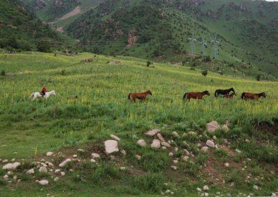 Die Hirten ziehen mit ihren Tieren in die Hochtäler . . .