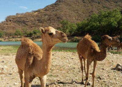Im Wadi Darbat