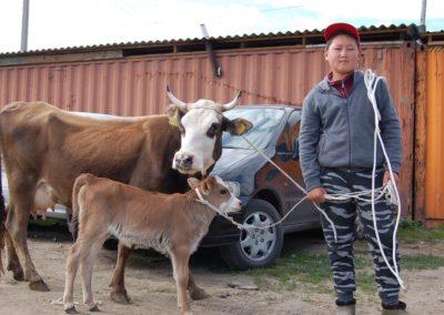 Auf dem Viehmarkt in Karakol