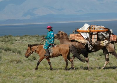 Die Jurte wird auf dem Kamel transportiert