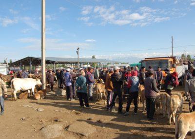 In Karakol findet einer der grössten Tiermärkte Zentralasiens statt