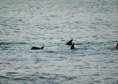 In der Delfinbucht