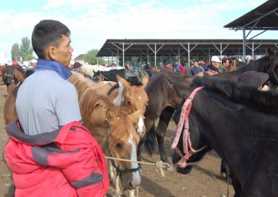 Sehr viele Pferde wechseln den Besitzer