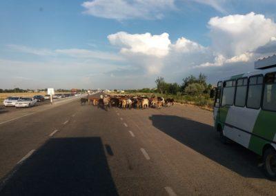 Viel Verkehr auf der Seidenstrasse